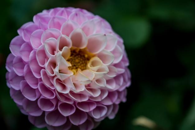 紫色の花を閉じます