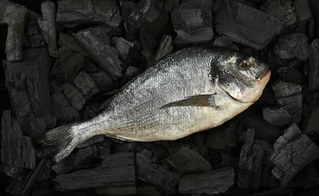바비큐 준비가 된 검은 덩어리 숯 조각에 원시 dorada 도미 생선을 닫습니다.