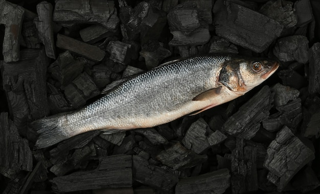 Close up raw sea bass fish on black lump charcoal pieces ready for barbecue, elevated top view, directly above