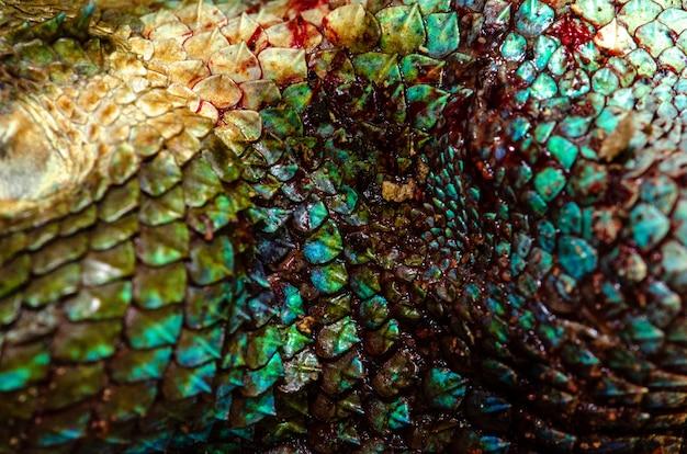 Close up real chameleon skin , chameleon injury skin texture for your design.