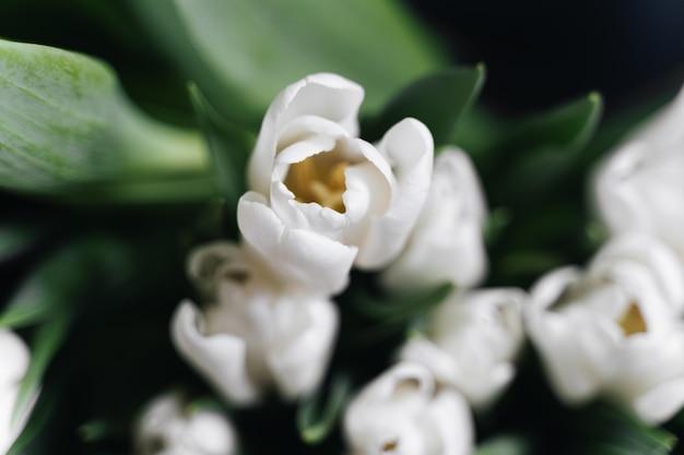赤と白のチューリップの写真を閉じます。春のコンセプト