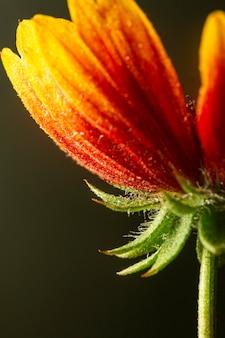 근접 빨간색과 노란색 꽃