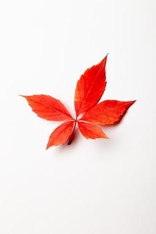 Крупный план красный осенний клен красочный фон