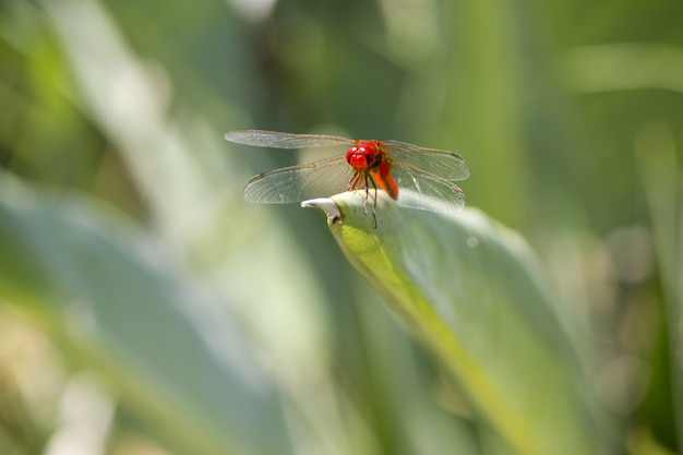 Close up of red dragonfly on plant