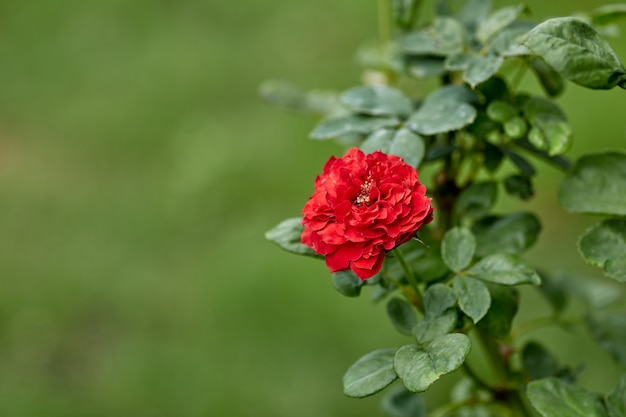 Close-up of red flowering plant in the garden