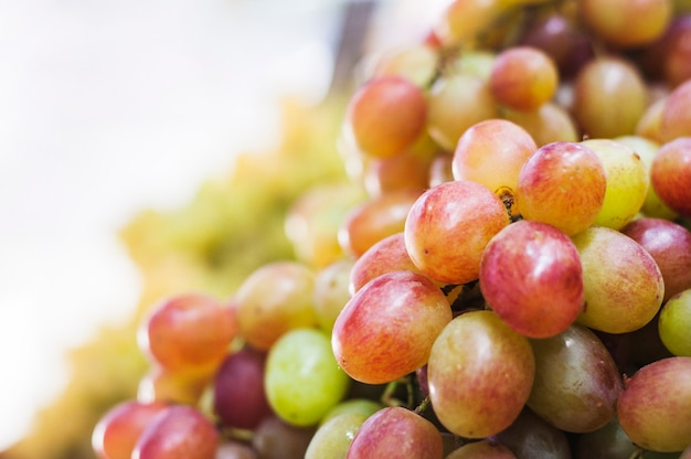 Close-up of red and green grapes