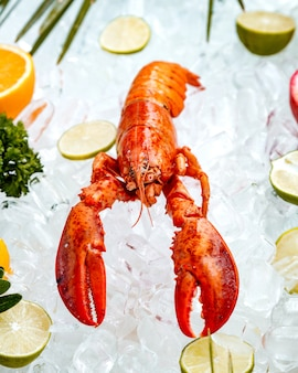 Close up of red lobster placed on ice surrounded with fruit slices