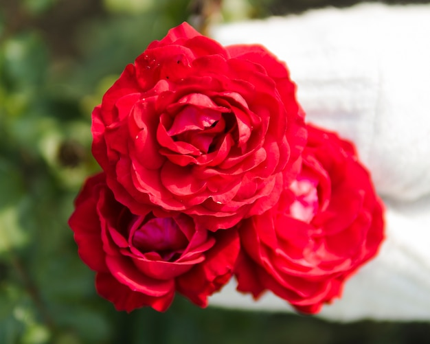 Close up of red rose bouquet