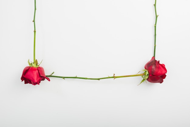 Close-up of red roses with stem on white background