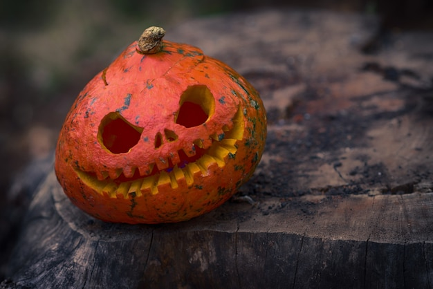 Close up of red scary and angry pumpkin with big eyes and tooth looking and smiling at camera