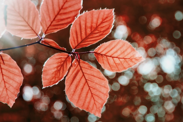 Close up of red tree leaves autumn forest background