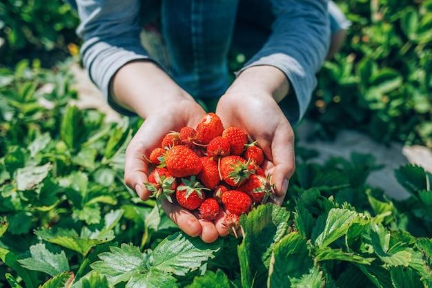 庭から熟したイチゴをクローズアップ