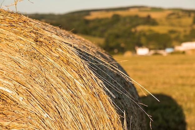 Крупный рулон сена в поле