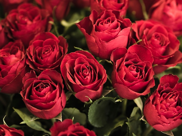 Close up of romantic red roses