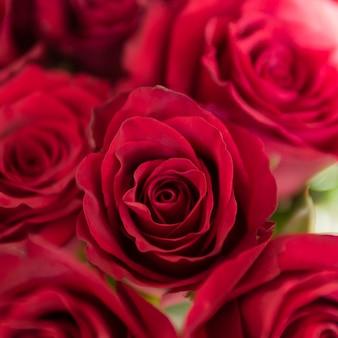 Close up of romantic rose bouquet