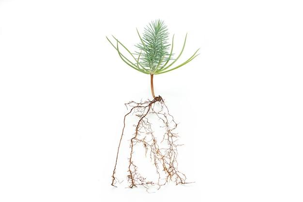 盆栽の根をクローズアップ