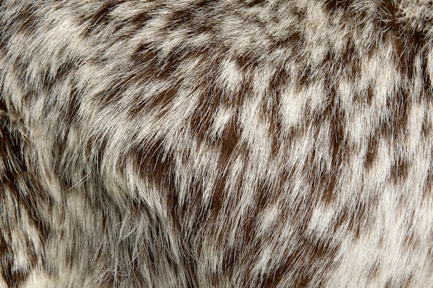 Close-up of rove goat fur background