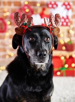 Chiuda in su del cane triste con corna di renna