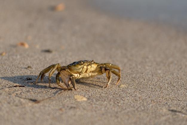 砂のカニをクローズアップ