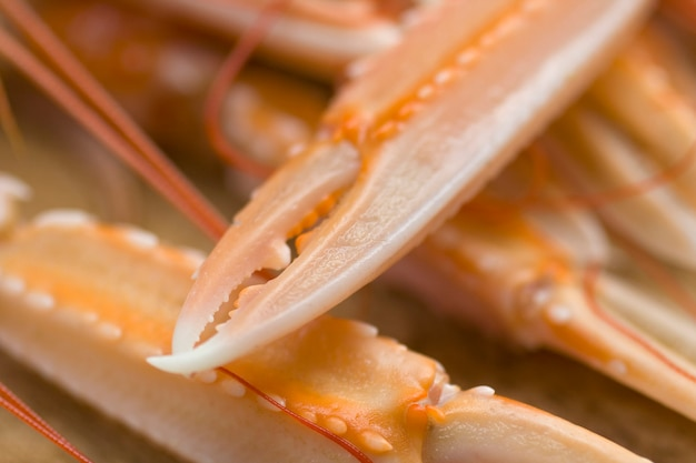Close up of scampi claws