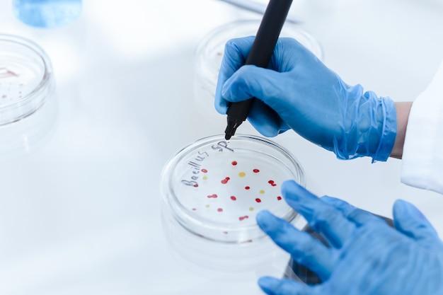 확대. 바이러스 성 박테리아로 페트리 접시를 표시하는 과학자. 과학과 건강.