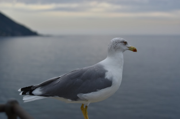 Close-up of a seagull in a seascape