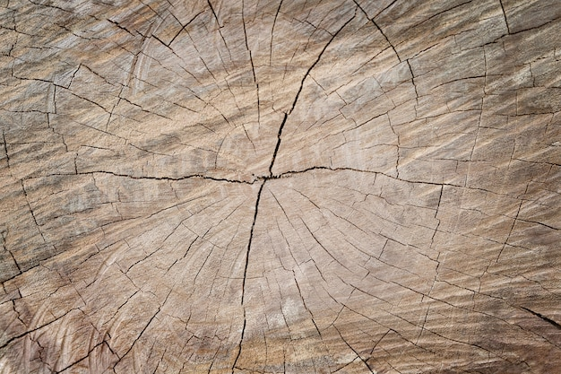 Закройте вверх по разделу старого пня дерева, деревянной предпосылки текстуры