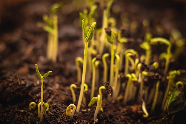 Закройте семя к дереву, посев, концепция выращивания семян растений, выращивание растений. посадите рассаду. молодые молодые растения, растущие в последовательности прорастания на почве