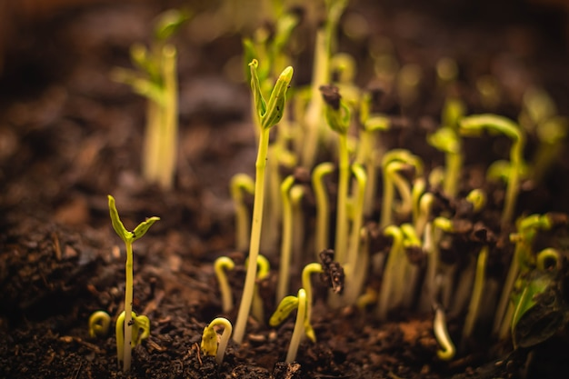 Close up seed to tree, seeding, plant seed growing concept, growing plants. plant seedling. young baby plants growing in germination sequence on soil