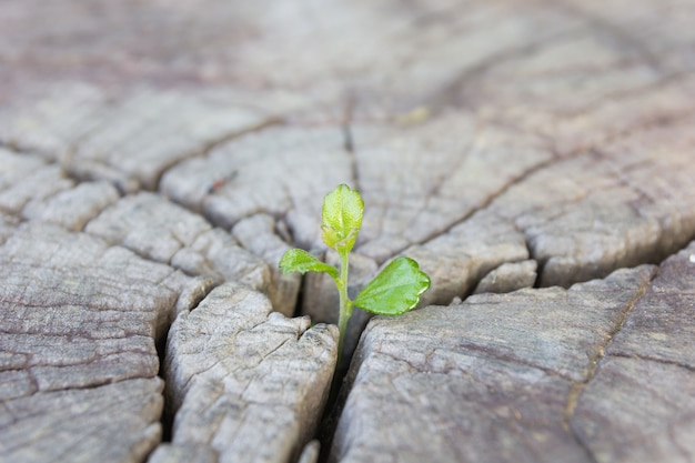 Close up seedling growing in the center trunk as a concept of new life