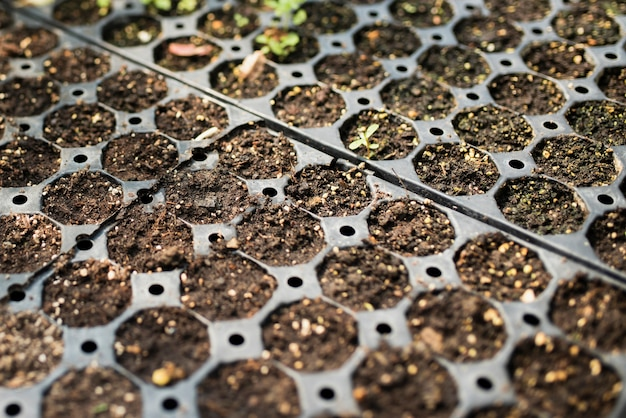 Close-up of seedlings in greenhouse