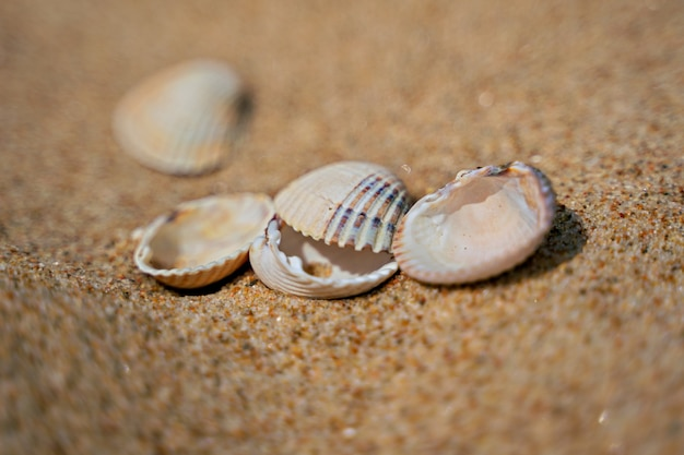 Close up of shells on sand shore with blurred sea