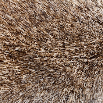 Close up shot of abstract wolf  fur background