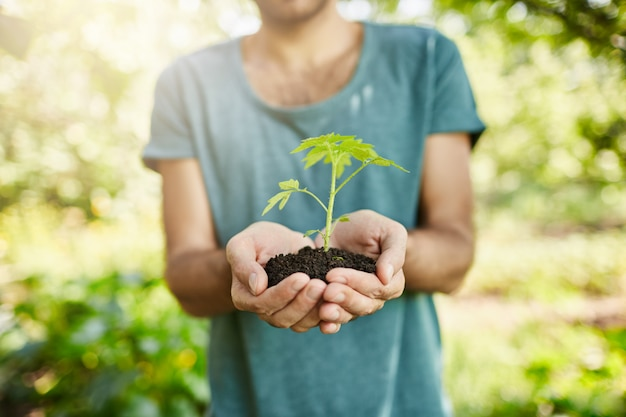Close up shot of dark-skinned man in blue t-shirt holding plant with green leaves in hands. gardener shows spout that will grow in his garden. selective focus