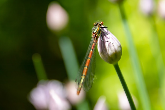 Close up shot of a dragonfly on a flower blossom