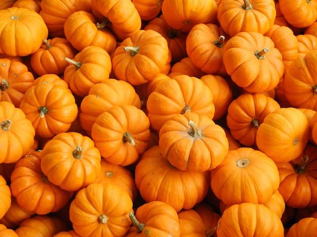 Immagine ravvicinata di zucche fresche di diverse forme e dimensioni, perfette per a
