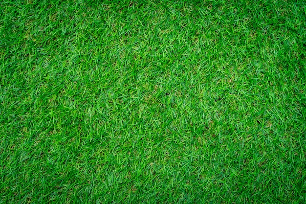 Close-up shot of green grass background.