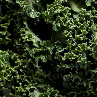Close-up shot of kale