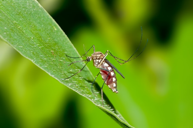 Close up shot of a mosquito on a leaf