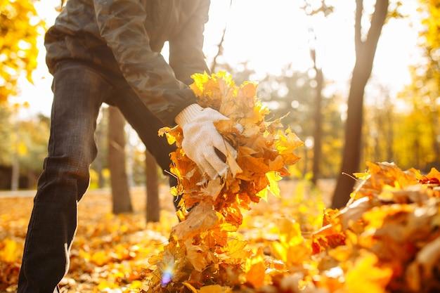 公園や森で黄ばんだ葉を集めている少年のクローズアップショット。領土の清掃、秋の風景。男性ボランティアが葉っぱを片付けています。
