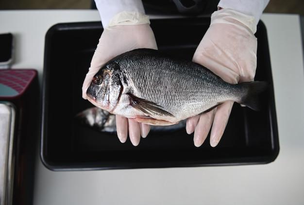 シーフード店の魚屋の手にある新鮮なドラドのクローズアップショット。新鮮な地中海の魚を保持している白い保護ゴム手袋の女性。フラットレイ構成