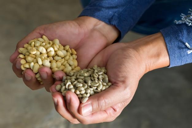 Крупный план кофейных зерен сорта арабика, подвергшихся процессу растрескивания.