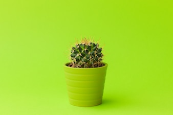 Close-up shot of cute little cactus in small green pot on lime color background.