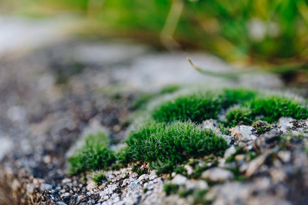 春の緑の苔のショットを閉じる