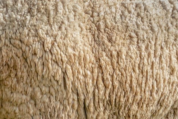 羊ウールの詳細のショットを閉じる。