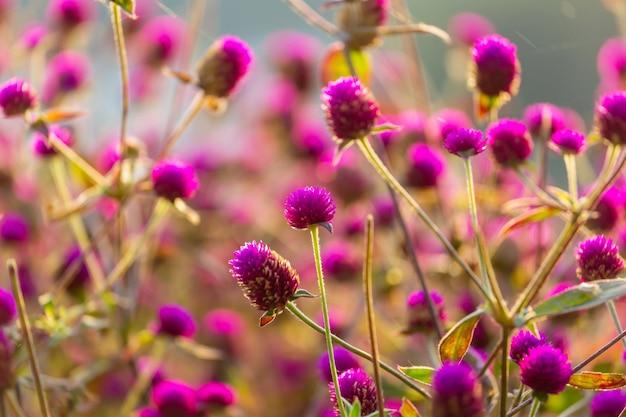 아름 다운 꽃의 근접 촬영입니다. 꽃 배경에 적합합니다.