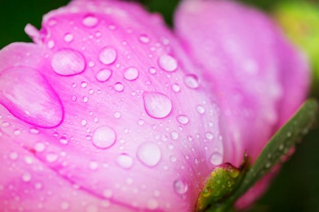 美しい花のクローズアップショット。花の背景に適しています。