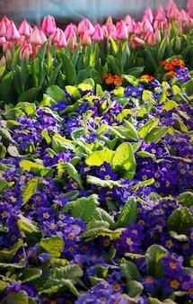 아름 다운 꽃의 클로즈업 샷입니다.