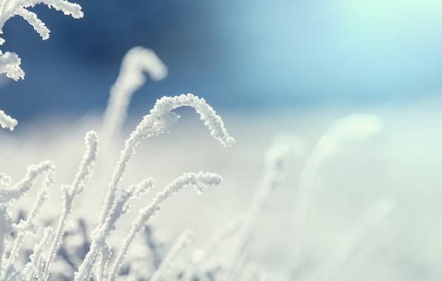 山の冬の朝の凍った草のクローズアップショット。