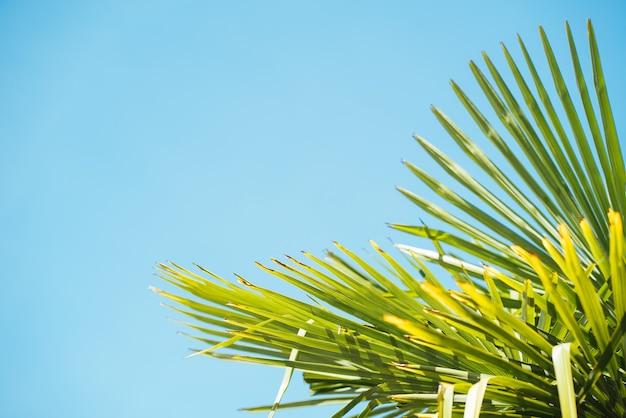 熱帯のヤシの木のクローズアップショット-夏に最適